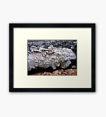 Milk-White Spreading Tooth Framed Print
