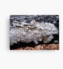 Milk-White Spreading Tooth Canvas Print