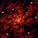 Floral Red Dew by Barbara A Lane