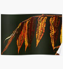 Staghorn Sumac leaves #2  Poster