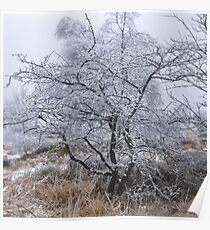 Hoarfrost covered trees in the moor Poster