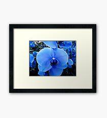 Feeling Blue...  Framed Print