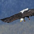 Nose Dive by EagleHunter