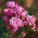Summer Rose by jules572