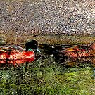Two Ducks by ronsphotos