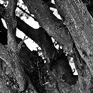 Tree Trunk B&W by lendale