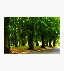 I would rather be with trees Photographic Print