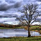 Lonely Tree At the Trout Lake by Sandra Cockayne