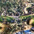 Marne reflections by Dave  Hartley
