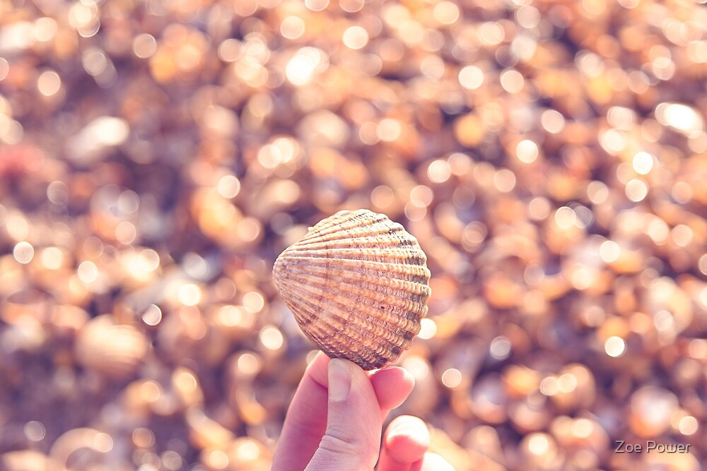 Sea shell sparkles by the sea by Zoe Power