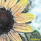Black Eyed Susan - Art by Marcia Rubin