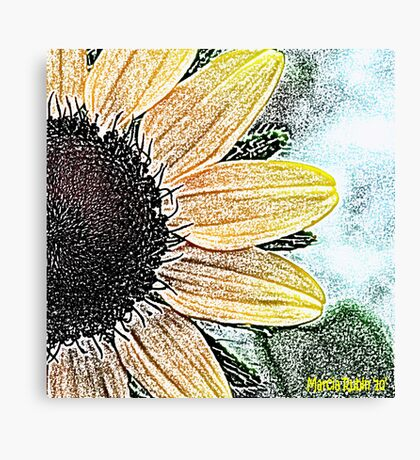 Black Eyed Susan - Art Canvas Print