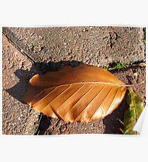 Fallen Russet Leaf Poster