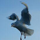The bird (detail) by Lidiya