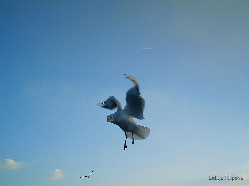 Grace of flying by Lidiya