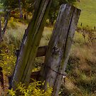 The Old Fence by vigor