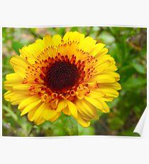 Crackling Flower Poster