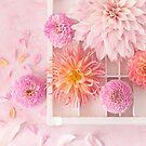 Dahlia flatlay in pretty pastel pinks by Zoe Power