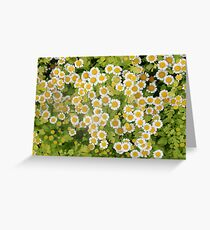 little patch of daisies Greeting Card