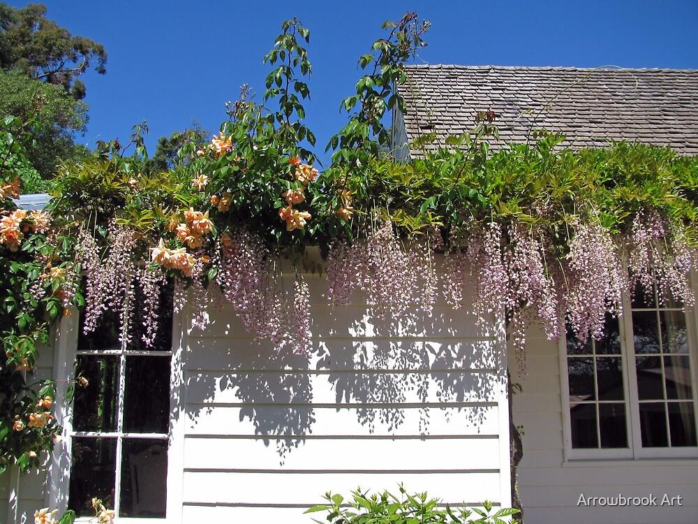 Wisteria Cottage by John Brotheridge