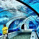Underground, Underwater Tunnel. by Usha Ganesh