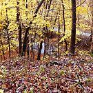 Autumn Glow by MarjorieB