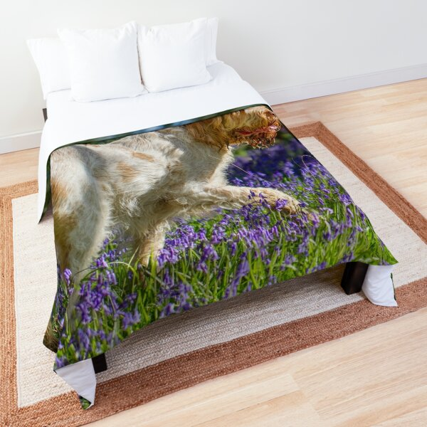 Spinone in a bluebell wood Comforter