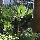 Palm Trees by Lorrie Davis