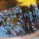 Reflection Two by Lorrie Davis