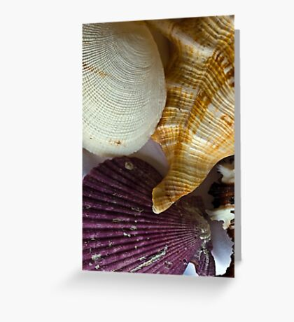 Shell compilation Greeting Card