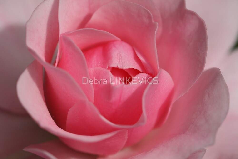 Pink by Debra LINKEVICS