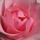 Pink by Debra LINKEVICS
