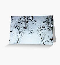 Snow scene, Jigokudani Greeting Card