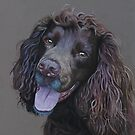 Working Cocker Spaniel, Fin by cathyscreations