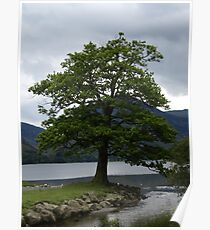 Natural Beauty - Trees at Buttermere Poster