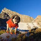 View Finding Mountain Pug by pugventurephoto