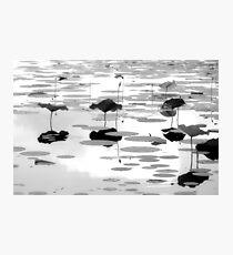 Pads Photographic Print