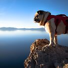Pug Wonders Which Way Is Up by pugventurephoto