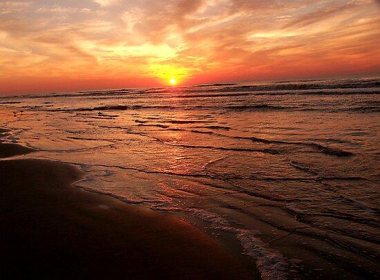 Isle of Palms Sunrise  by Judy Grant