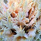 Cycad coral by Antionette