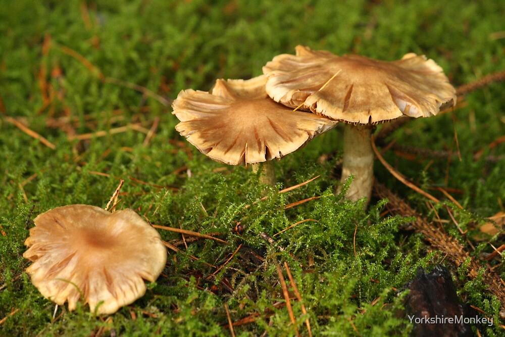 Toadstools by YorkshireMonkey