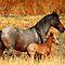 Foals!