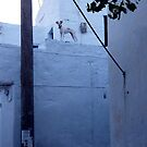 Dog on a wall by Martin  Hazelgrave