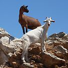 Goats by Martin  Hazelgrave