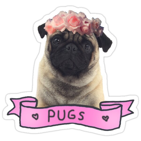 Quot Pug Quot Stickers By Kuroko1033 Redbubble