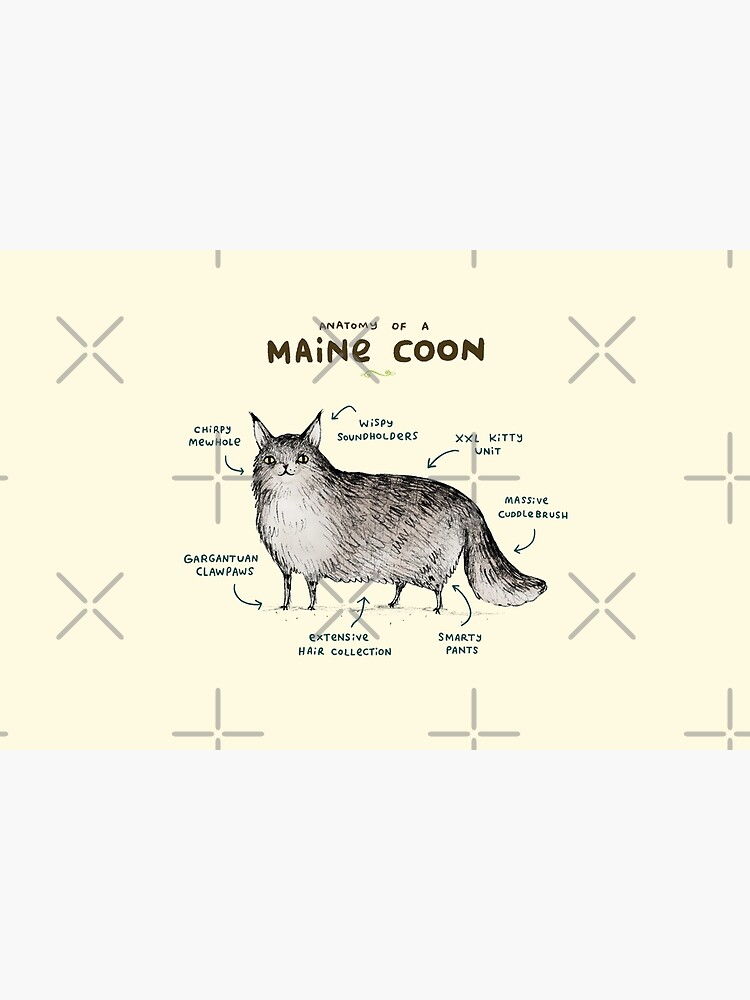 Anatomy of a Maine Coon by SophieCorrigan