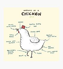 Anatomy of a Chicken Photographic Print