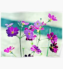 Spring Flowers.  Poster