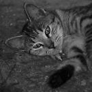 nutter cat by leapdaybride