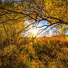 Fall Bright by Bob Larson